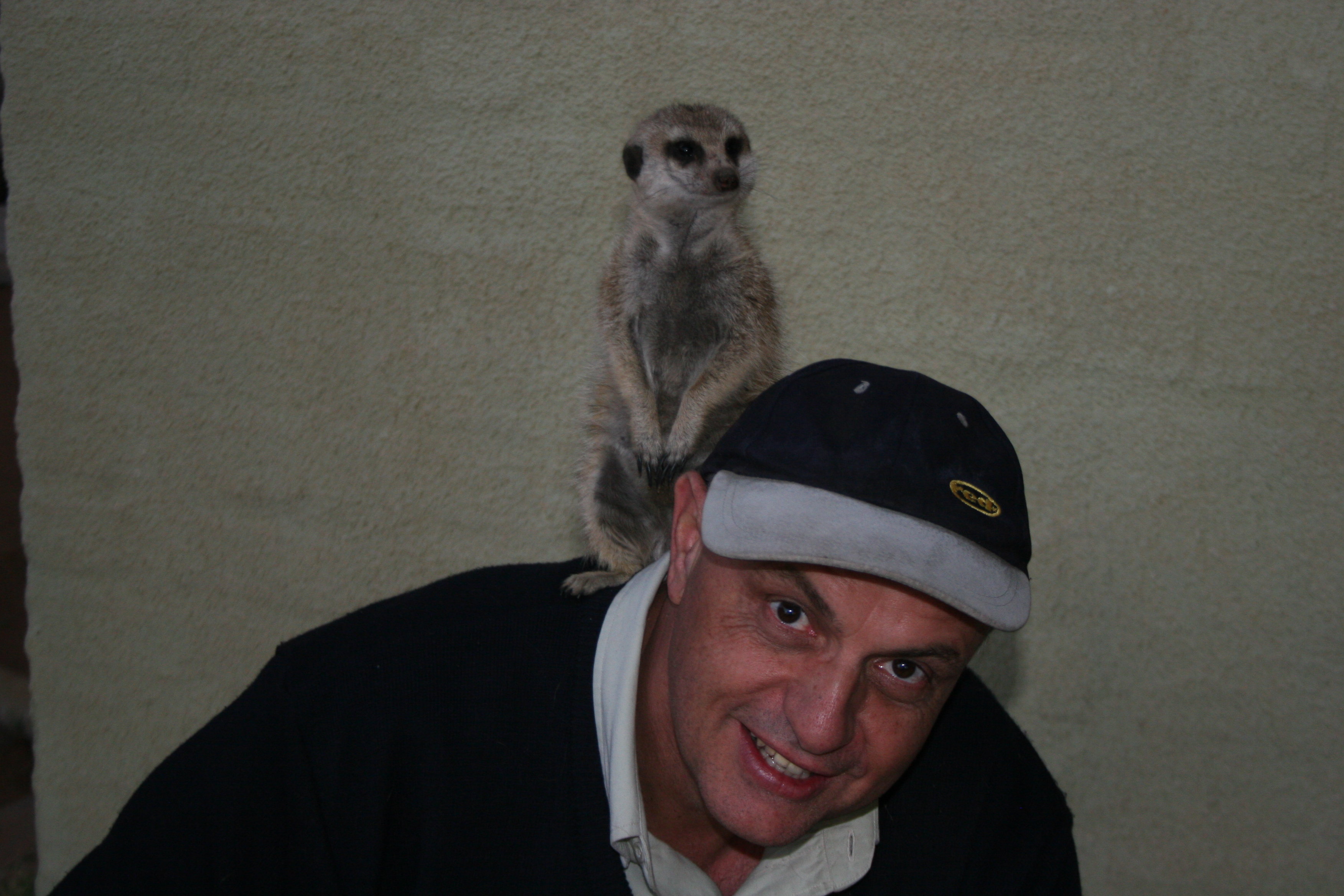 """Kiekie"", an alert meerkat from the Namib desert."