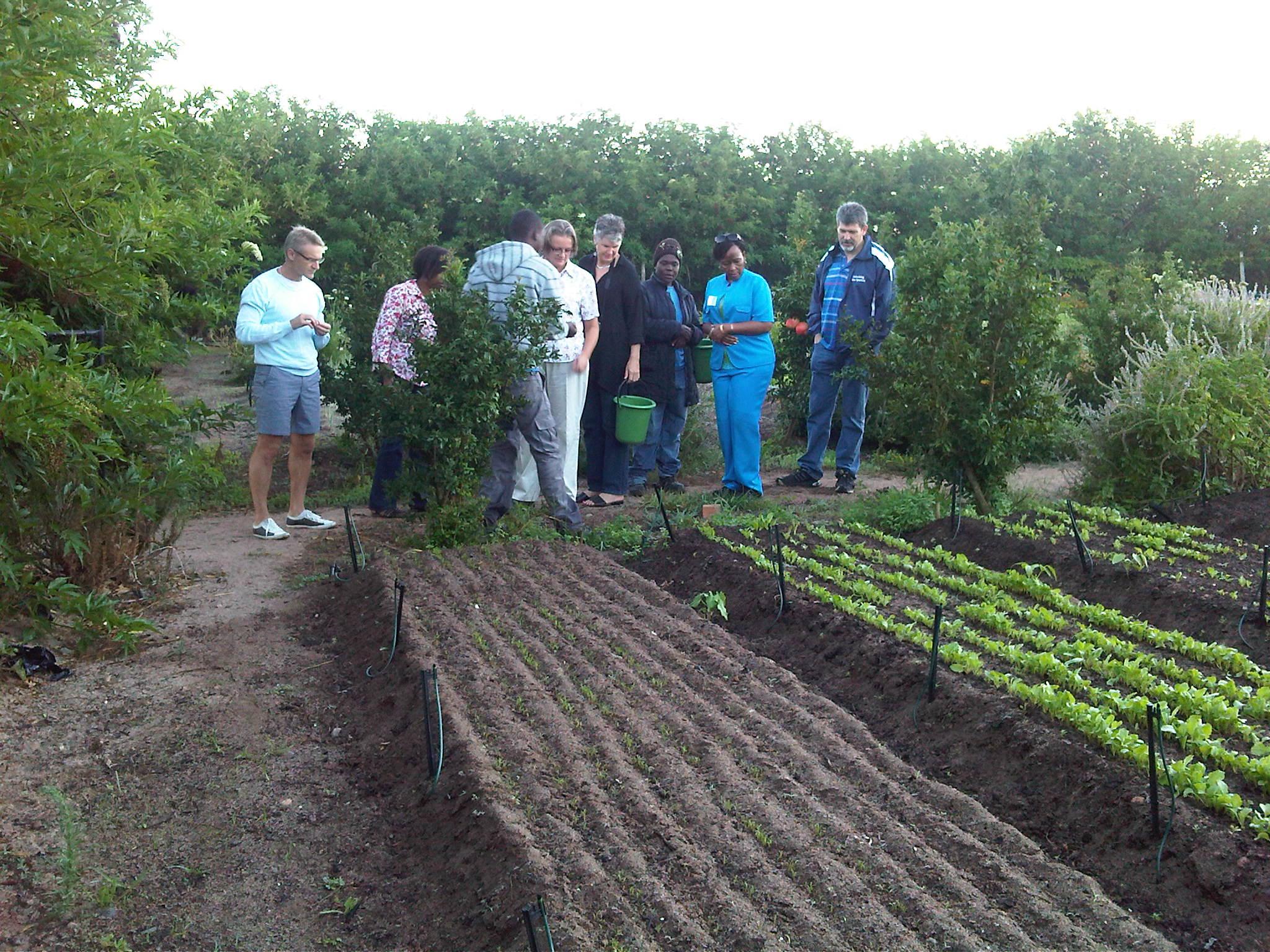 Small-scale farming, Stellenbosch, Cape Town